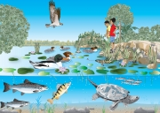Kids & Aquatic Wildlife, Whats For Lunch
