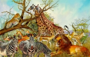 African Animals for McGraw-Hill
