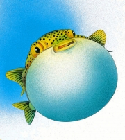 Blowfish for Key Porter