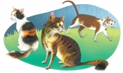 Cats for Nelson Publishing