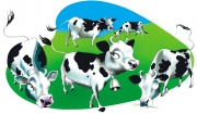Cows for Nelson Publishing