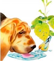 Dog  &  Bird Drinking for Holt, Rinehart & Winston