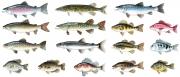 Fish for Key Porter