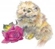 Kitten  &  Rose