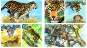 Leopard for Chickadee Magazine