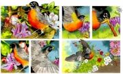 Robin for Chickadee Magazine