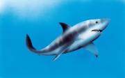 Shark for Key Porter Publishing