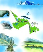 Newfoundland  &  Labrador The Kids Book Of Canada